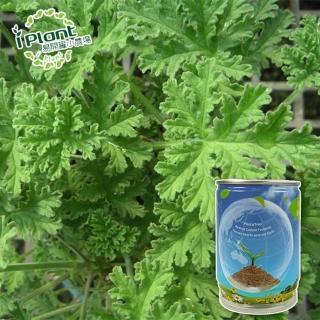 【iPlant】易開罐頭小農場-防蚊樹/香檸檬(開心農場療鬱小物)