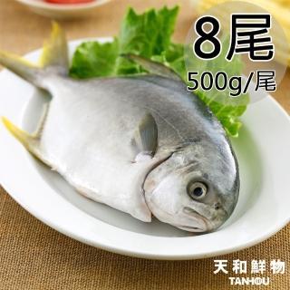 【天和鮮物】嚴選澎湖特大黃金鯧8尾(500g/尾)