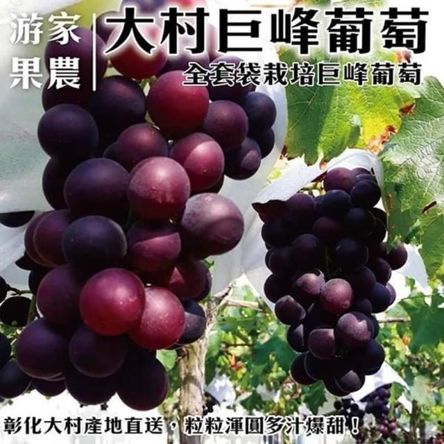 【農民直配】大村特大顆巨峰香檳葡萄X4箱(每箱4串入/約4斤±10%含箱重)