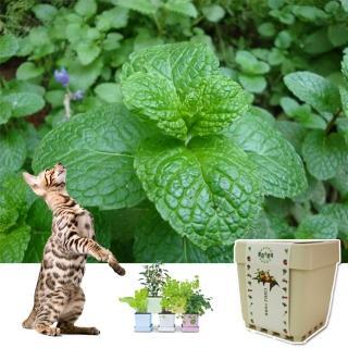 【iPlant】積木小農場-貓薄荷(內含種子培養土肥料)