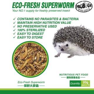【昆寶寵物原形食糧】大麥蟲生鮮包(蜜袋鼯/刺蝟/鬃獅蜥最愛)
