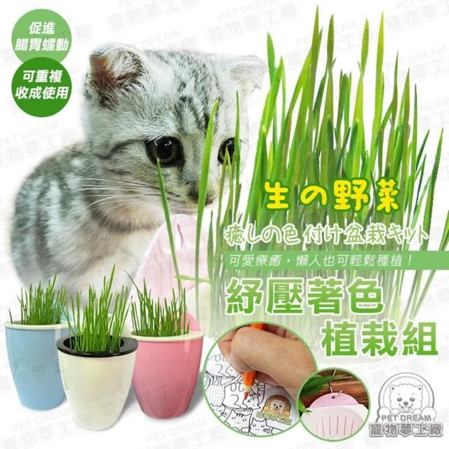 【寵物夢工廠】買一送一 / 貓草種子組合 紓壓著色植栽組 內含澳洲進口貓草種子(懶人水耕盆栽 吊掛盆栽)
