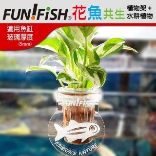 【FUN FISH 養魚趣】FUNFISH 花魚共生缸專用- 植物架5mmx2+水耕植物x2(水耕植物及植物架花卉圖案-隨機出貨)