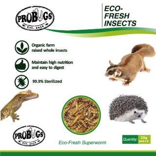 【昆寶寵物原形食糧】麥皮蟲生鮮包美國版(食蟲寵物大薯條)/