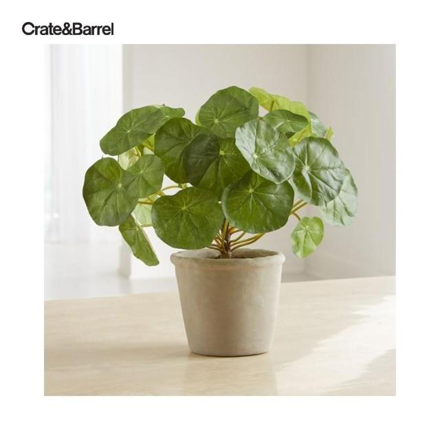【Crate&Barrel】Potted 金蓮花盆栽