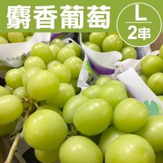 【甜露露】日本麝香葡萄L 2串入(每串591-660g)